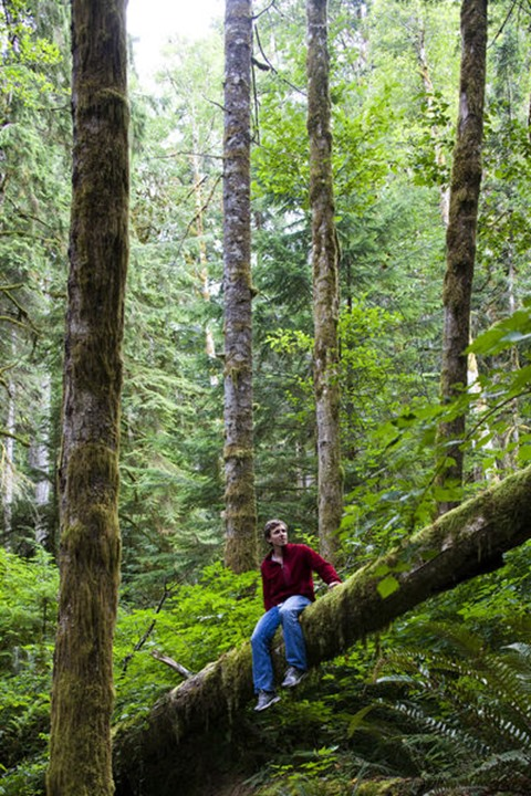 ELWHA RIVER, OLYMPIC NATIONAL PARK, WASHINGTON, USA. A man sits on a log in the thick green forest of the Olympic National Park.