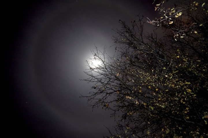 A lunar halo is seen during a winter night full moon with a tree lit in the foreground of Louisville, KY.