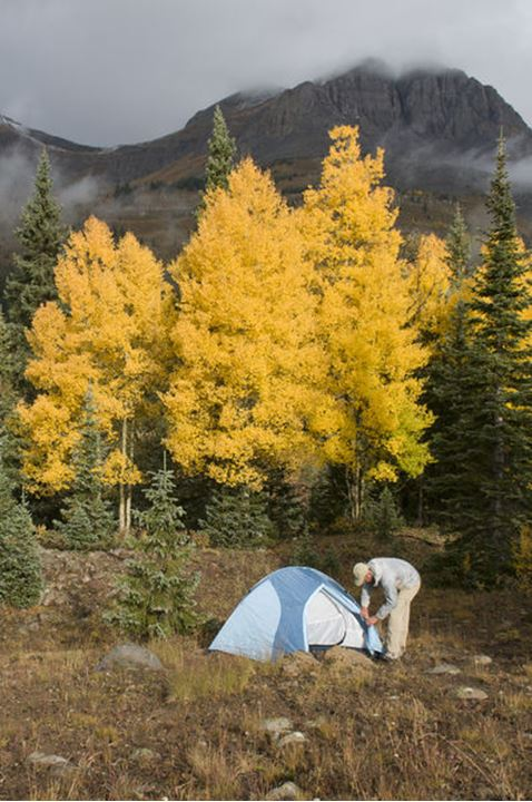 A man setting up a tent on Molas Pass near yellow aspen trees and below the Grand Turk, San Juan National Forest, Silvetron, Colorado.