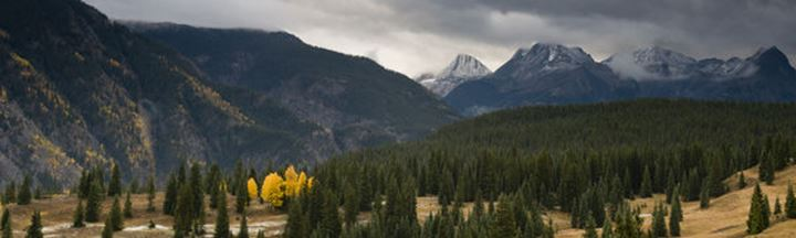 Fall Colors on Molas Pass with the Grenadier Mountains in the background, San Juan National Forest, Silverton, Colorado.