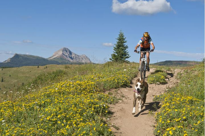 A woman and her dog mountain biking the Molas Pass section of the Colorado Trail in the San Juan National Forest, Silverton, Colorado.