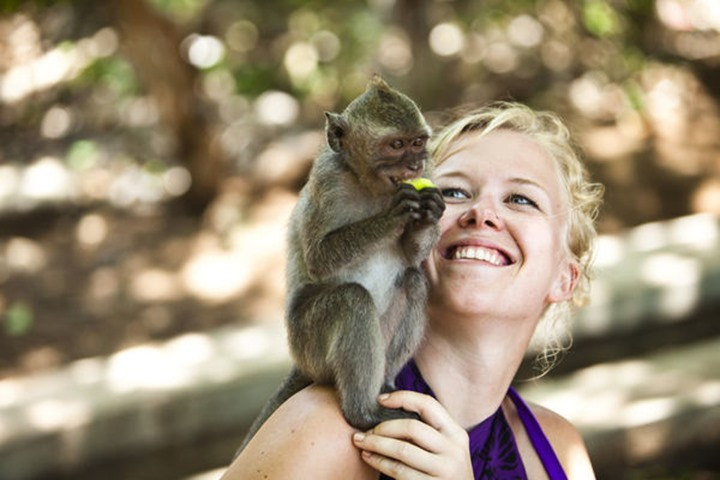 A woman smiling as a monkey eats on her shoulder in Bali, Indonesia.