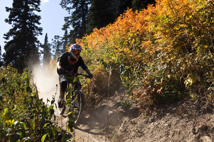 A athletic man mountain biking down Teton Pass with fall colors in Jackson, Wyoming.