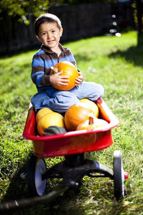 Tuscan Kiyoshi Glass, Japanese-American 3.5 boy holds pumpkins and squash as he plays with a red wagon.