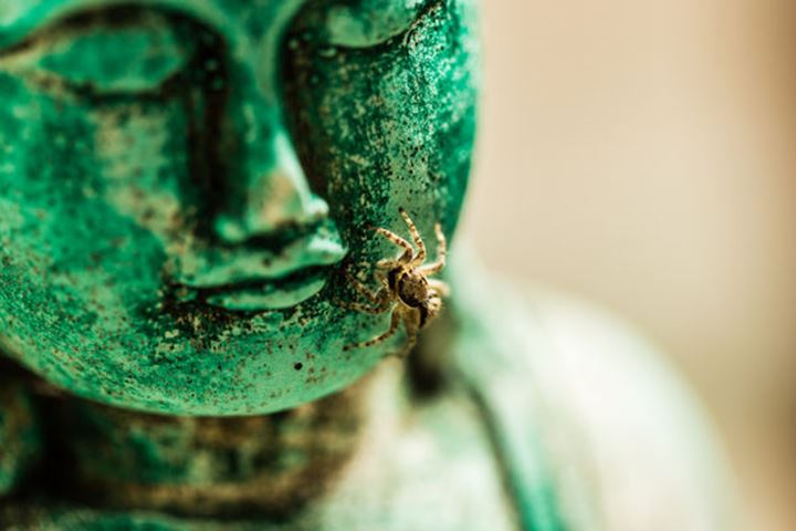 Green Buddha with spider