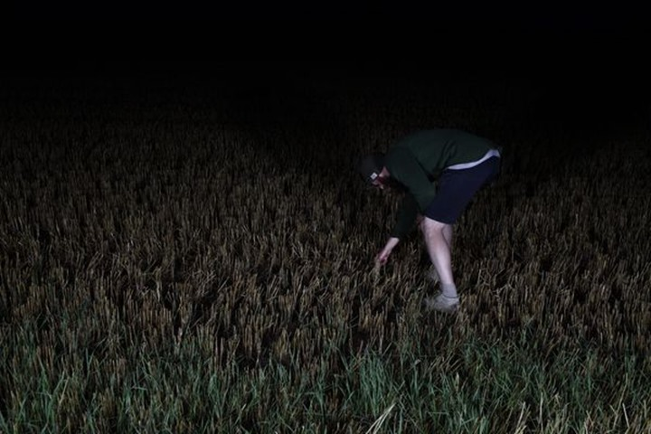A man picking something on a field, night, Sweden.