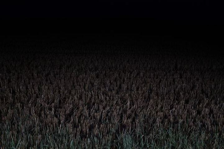 Farm field, nighttime, Sweden.