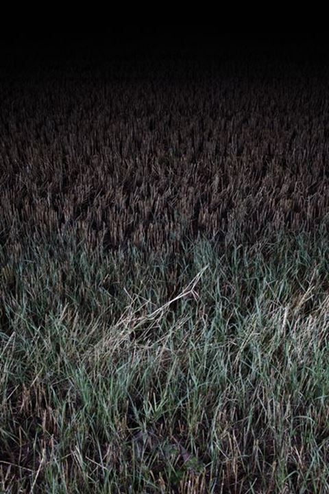 Farmers field, nighttime, Sweden.