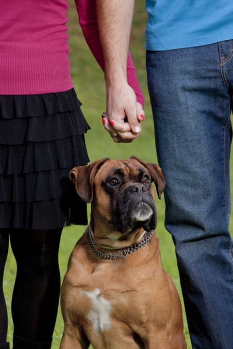 Couple Holding Hands with their Dog in Front of them