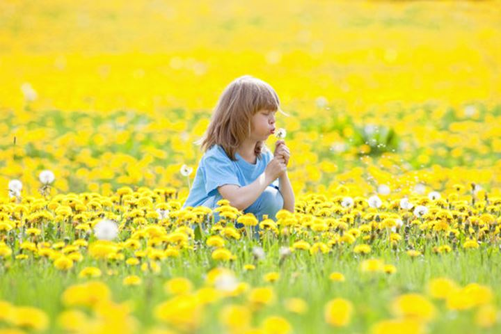 Boy with Long Blond Hair Picking Dandelions on a Meadow
