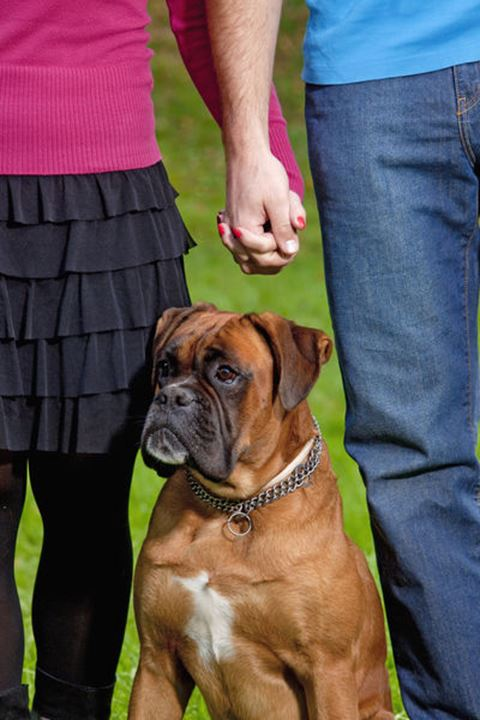 Young Couple with their Dog Holding Hands