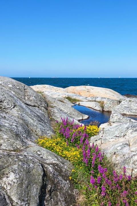 Flowers in a crevice in the archipelago