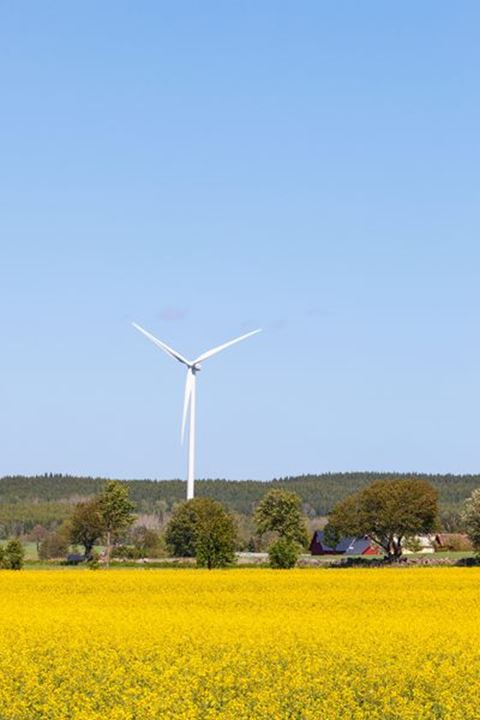 View with blooming rapeseed fields and Wind turbine