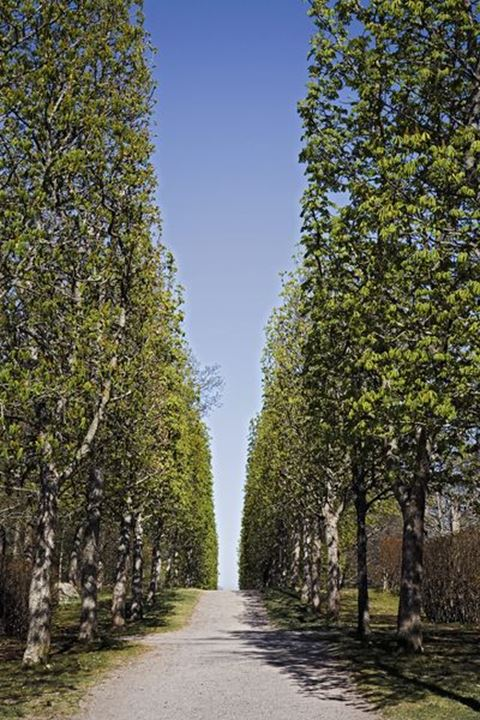 Sunny day, a road with trees on both sides disappears in the picture.