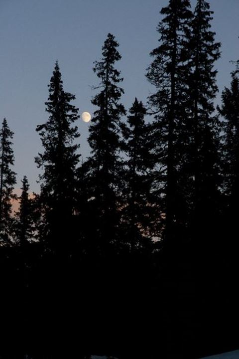 Treetops and moon, re, Sweden