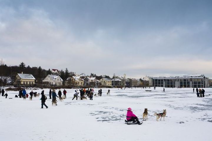 Husky dog owners gather on ice-covered Tjornin lake on the last day of the year.  Reykjavik Iceland