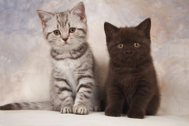 Portrait of two kittens, Stockholm, Sweden