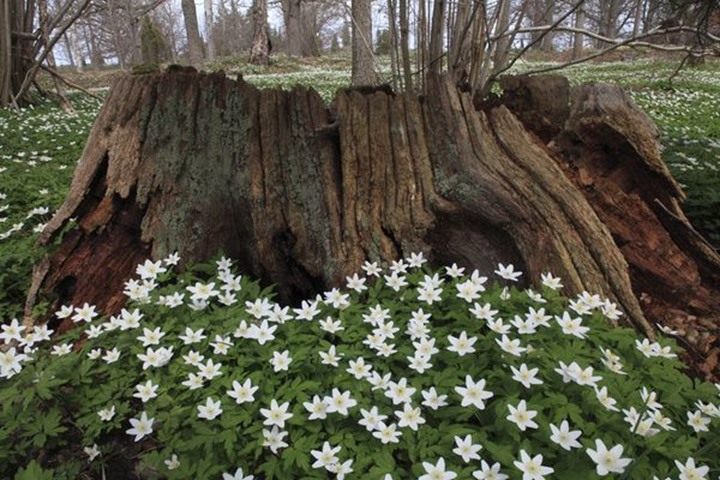 Old tree trunk and flowers