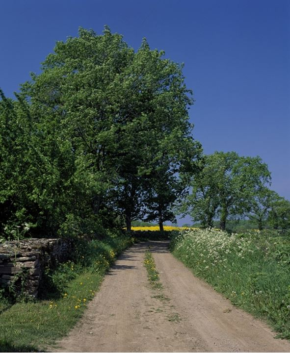 Dirt road passing through a field, Oland, Sweden