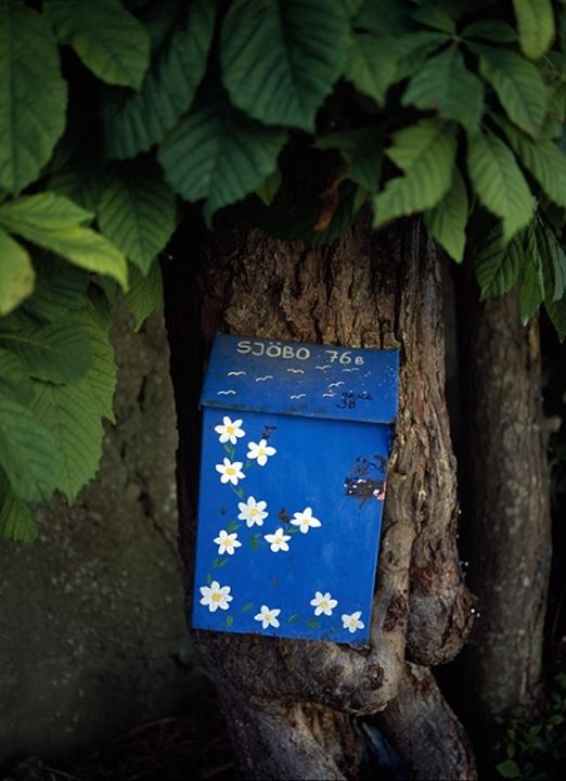Close-up of a mailbox mounted on a tree