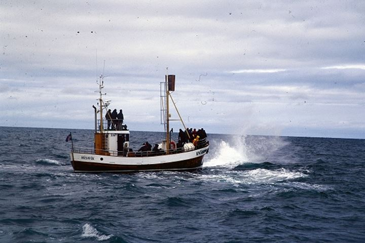 People on a sightseeing tour in a small fishing boat