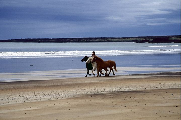 A person riding Icelandic horses by the seashore