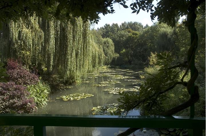 Waterlily pond in Monet's garden, Giverny, France