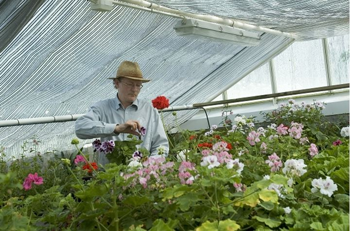 A gardener at work in a greenhouse, Waldemarsudde, Stockholm