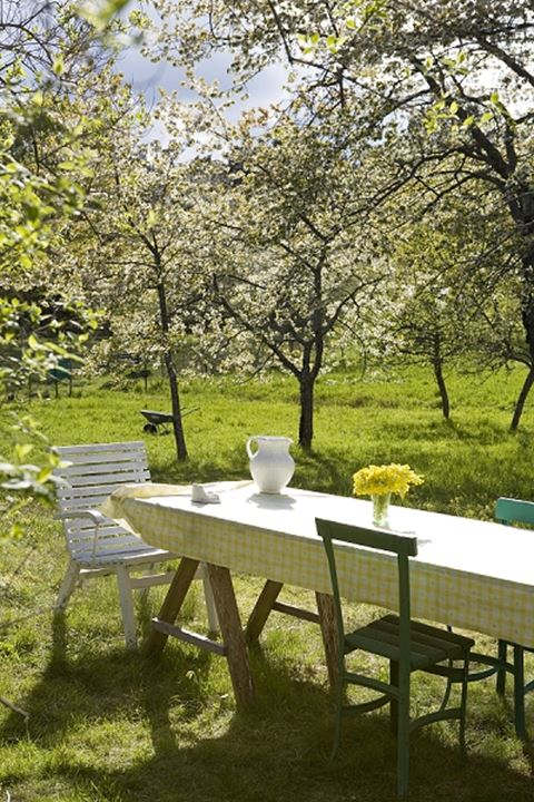 Table and chairs in a garden with fruittrees, Gåsä, Sweden