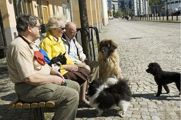 People sitting on a bench with dogs, Sädermalm, Stockholm, Sweden