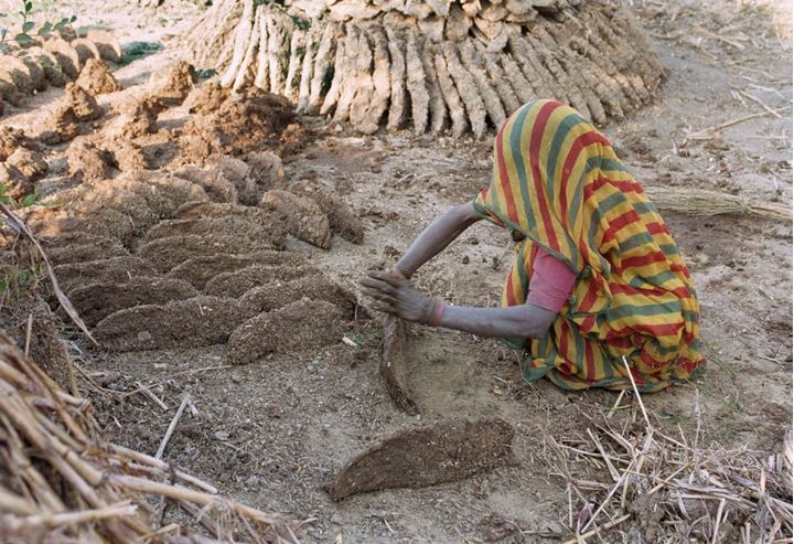 Woman preparing dung for burning, India 1996