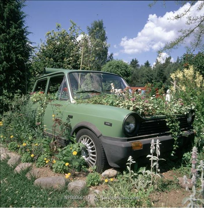 A green car in the grass