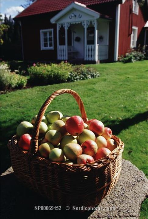 A basket of apples in the yard