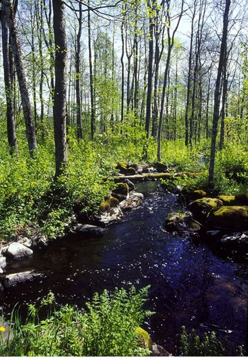 Stream flowing through the trees in forest