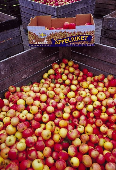 Overhead view of assorted apples