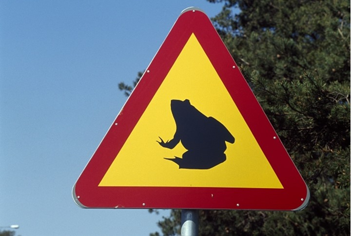 Road sign warning about frogs crossing