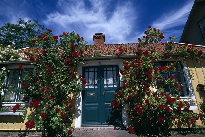Red flower plants on the facade of a house
