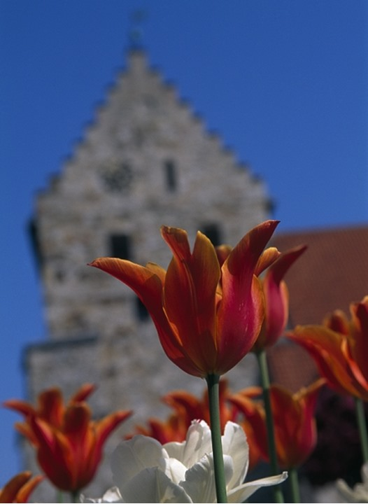 Close up of flowers, a church tower in background