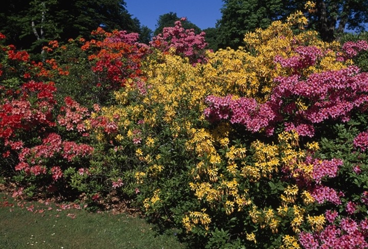 Colourful flower bushes in the garden
