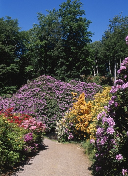 Bushes with colourful flowers and trees