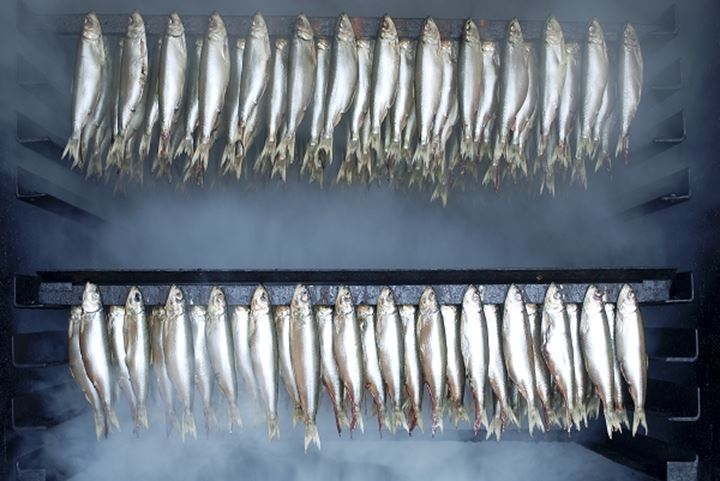 Sardines hanging in rows on the chamber