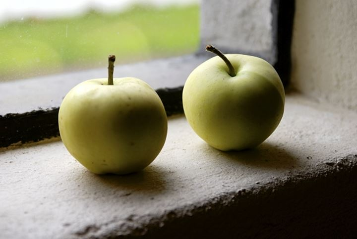 Close-up of two green apples on a window sill