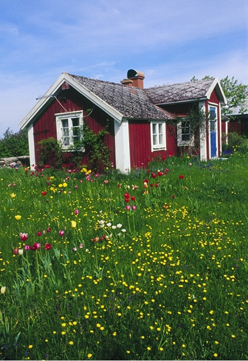 Houses in a field
