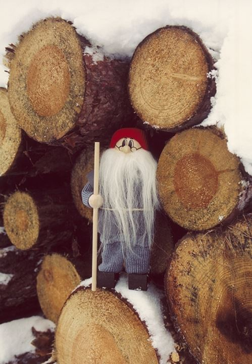 A gnome with long beard and logs