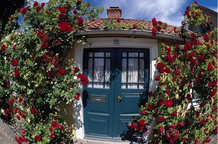 A cottage with red flowers in front of it