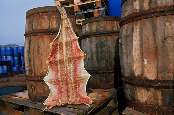 An animal skin with barrels
