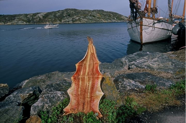 An animal skin on the rock with boats near the sea