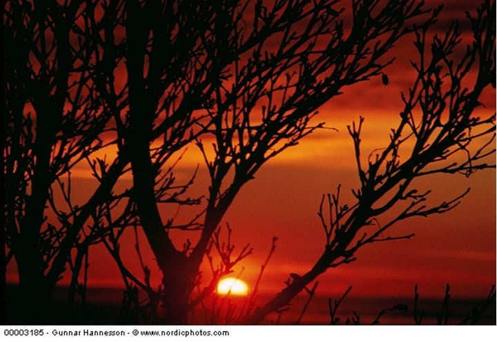 Looking at the red sunset through the branches of a tree