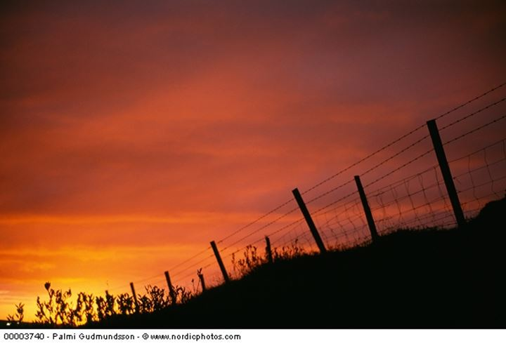 A wire fence and a yellow sunset