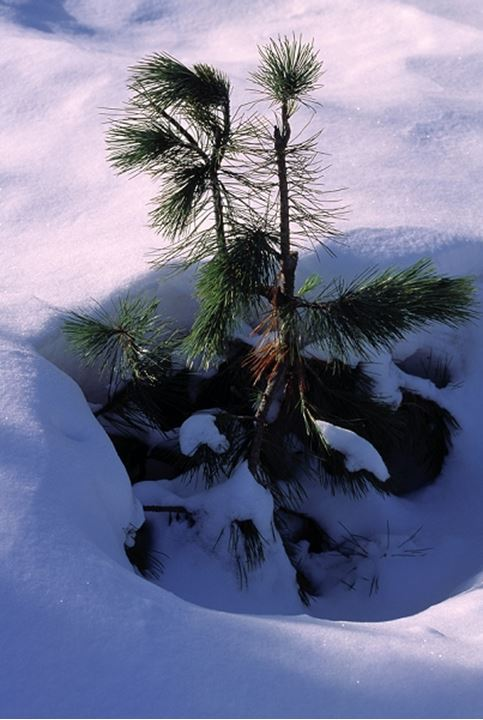 A close-up of a small tree in the snow